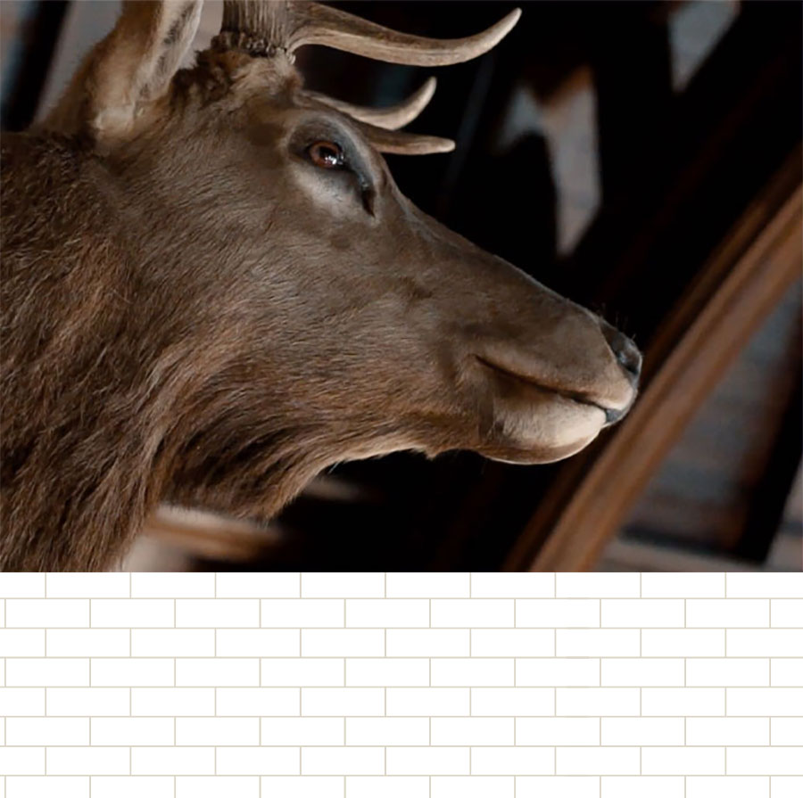 Mounted stag head